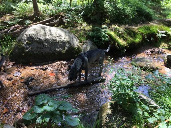 Vatten är bra till mycket sa Hugo, både att dricka och bada fötterna när det är varmt
