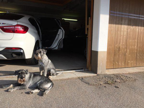 Grabbarna håller koll när vi packar om bilen