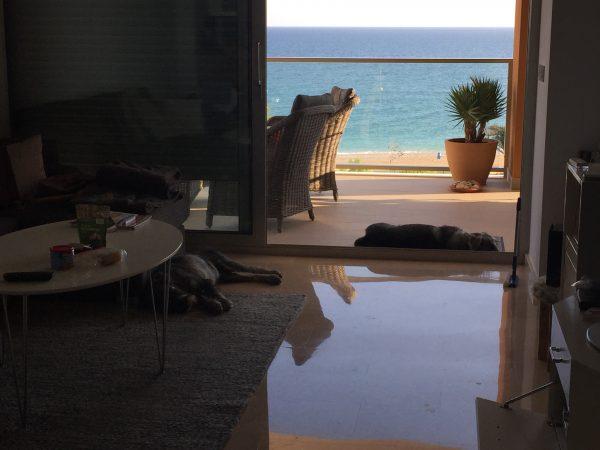 Det gäller att hitta sina favvo ställen, Axel i dörröppningen (=svalkar) och Hugo på mattan (=som kommer hemifrån)