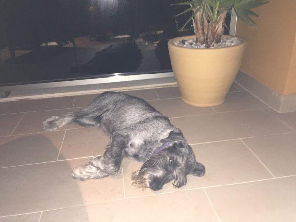 Skönt att slappa på terassen sa Hugo