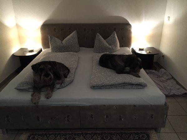 På väg hem och killarna har tagit plats i sängen på Tonis Tenne i sydtyskland