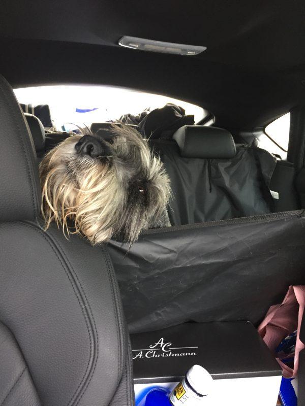 Axel har som vanligt sin egen stil, här sitter han fastspänd i säkerhetsbältet bak men ska ändå ha koll framåt...fast han somnade så här, sötnöten